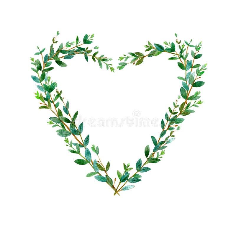Rama serce eukaliptusowe gałąź rabatowa kwiecista zieleń ilustracja wektor