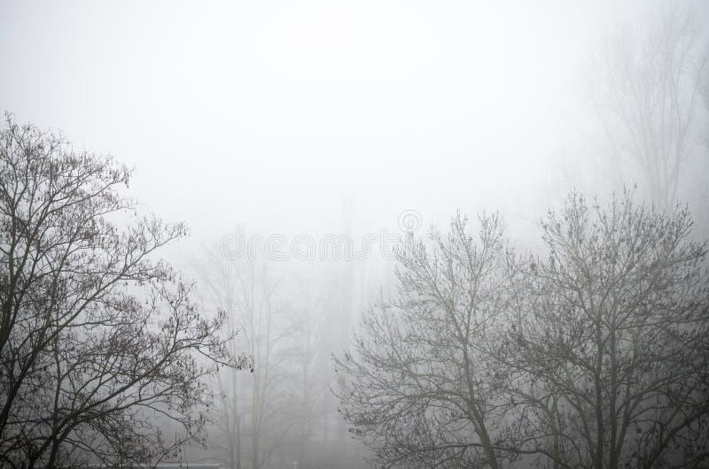 Rama sola en la niebla blanco y negro imágenes de archivo libres de regalías