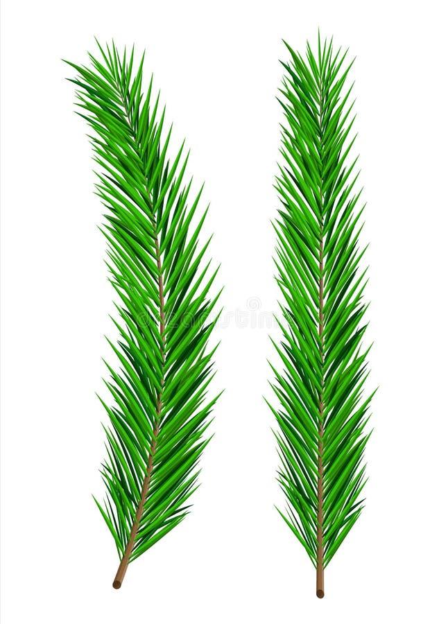 Rama spruce enorme verde Árbol imperecedero, abeto ilustración del vector