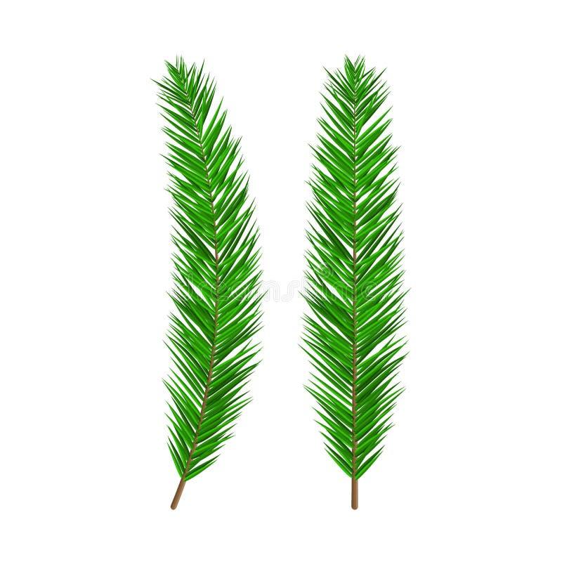 Rama spruce enorme verde Árbol imperecedero, abeto libre illustration