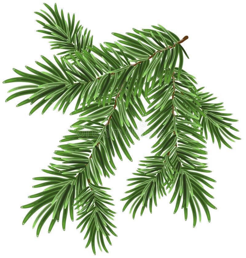 Rama spruce enorme verde Ramas del abeto ilustración del vector