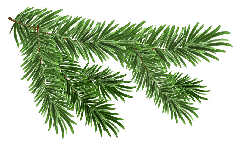 Rama spruce enorme verde Ramas del abeto libre illustration