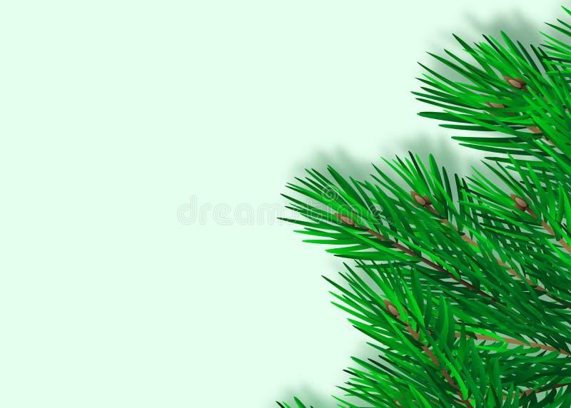 Rama spruce enorme verde Ramas del abeto Aislado en el ejemplo blanco del vector stock de ilustración