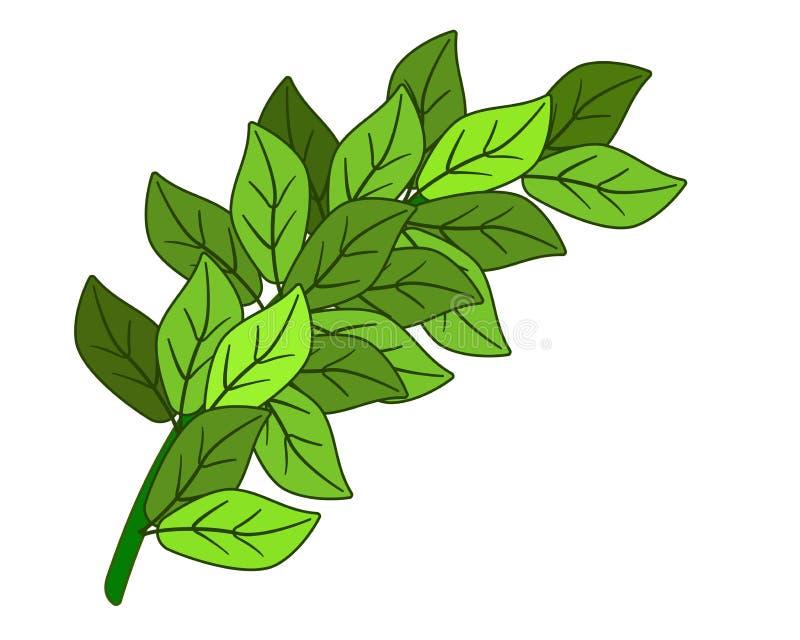 Rama verde con las hojas - imagen del vector Rama mullida verde gruesa con las hojas frescas de la primavera ilustración del vector