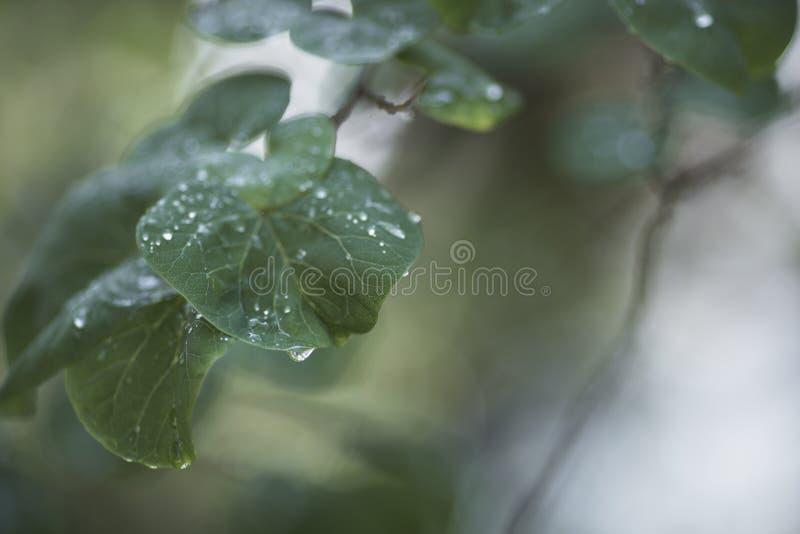 Rama verde de la primavera fotos de archivo