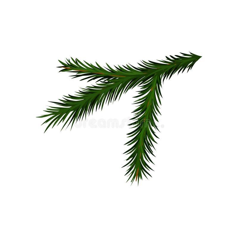 Rama verde del árbol de la picea o de pino con las agujas cortas Planta tradicional de la Navidad Diseño plano del vector ilustración del vector