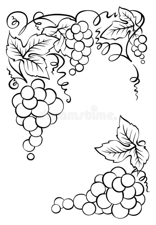 Rama wiązki winogrona ilustracji
