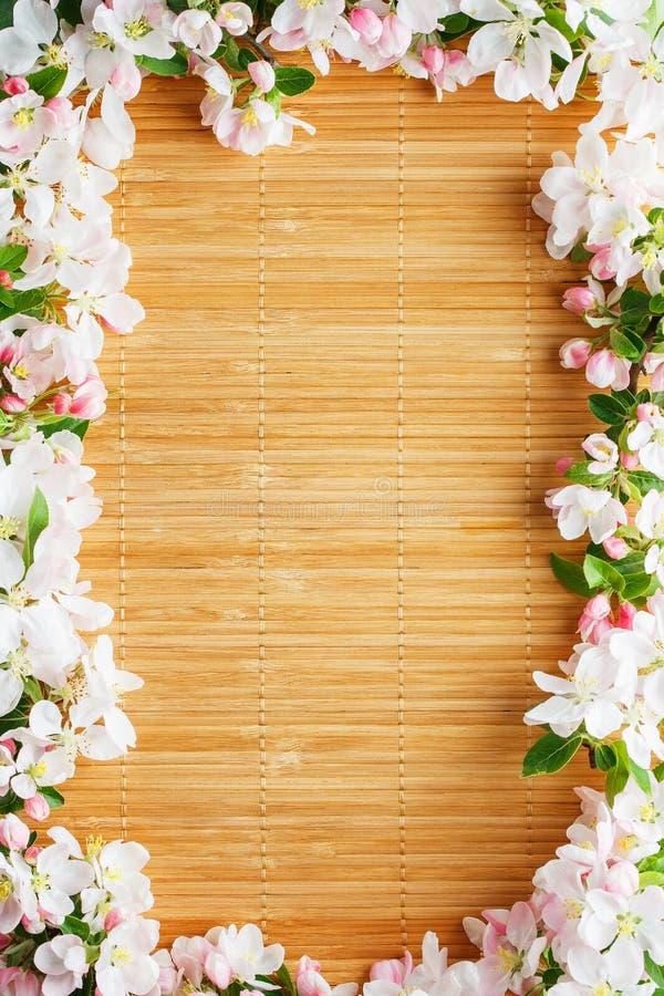Rama wiosna kwiaty Sakura na bambusowym tle Pi?kny czere?niowy okwitni?cie Sakura w wio?nie obrazy stock