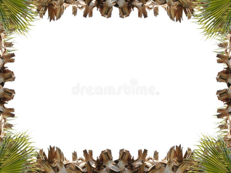 Rama wspinaczkowa roślina odizolowywająca dalej zdjęcie stock