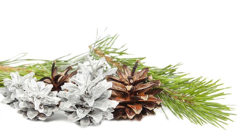 Rama y conos de árbol de abeto aislados en blanco imagen de archivo
