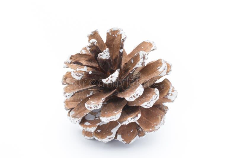 Rama y conos de árbol de abeto aislados en el fondo blanco imagen de archivo