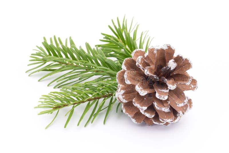 Rama y conos de árbol de abeto aislados en el fondo blanco imágenes de archivo libres de regalías