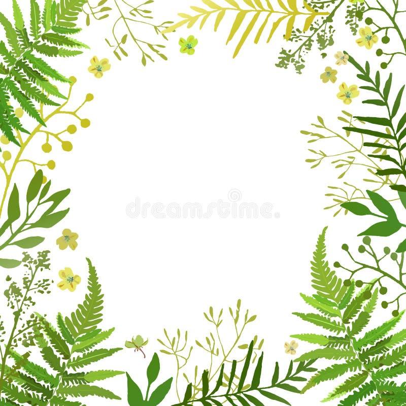 Rama z liśćmi Wektorowy kwiecisty set z ręki rysującymi zielonymi folia ilustracji