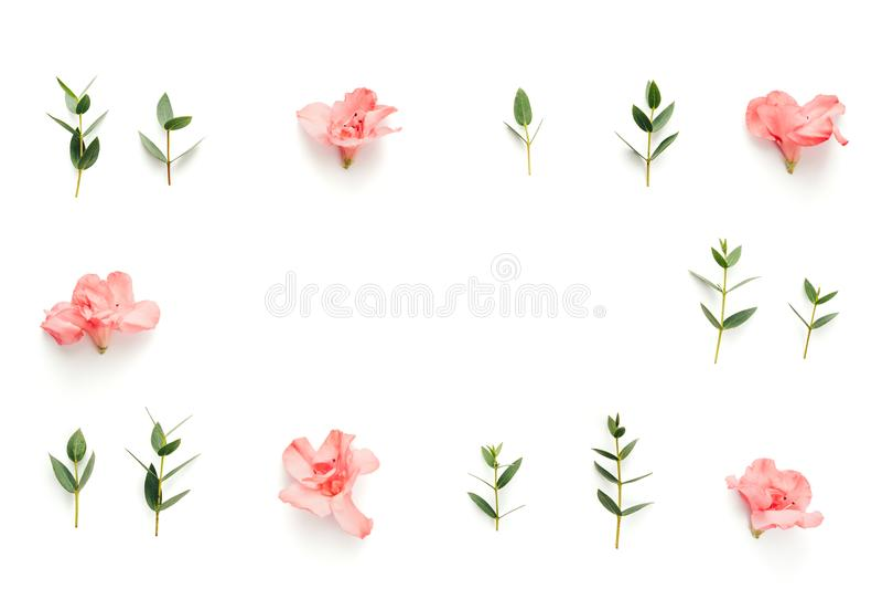 Rama Z miękkich części menchii azalii kwiatami I zieleń liśćmi Na Białych półdupkach obrazy stock