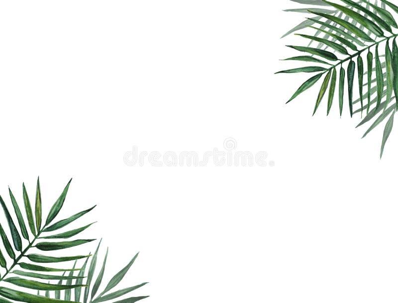 Rama z palma liśćmi beak dekoracyjnego latającego ilustracyjnego wizerunek swój papierowa kawałka dymówki akwarela ilustracji