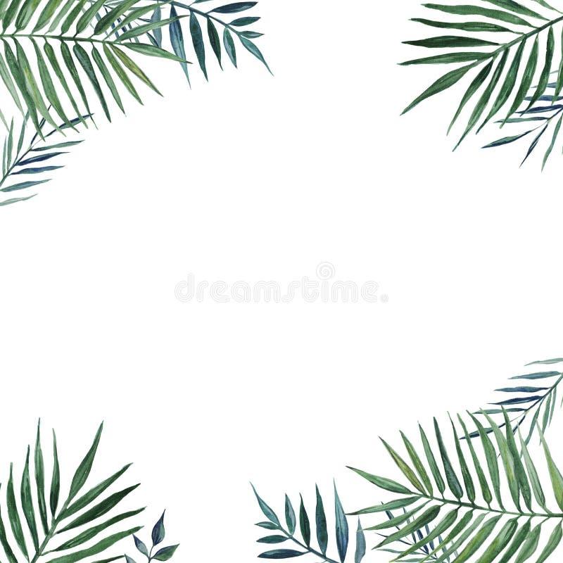 Rama z palma liśćmi beak dekoracyjnego latającego ilustracyjnego wizerunek swój papierowa kawałka dymówki akwarela ilustracja wektor