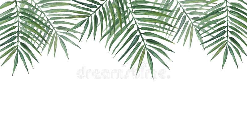 Rama z palma li??mi beak dekoracyjnego lataj?cego ilustracyjnego wizerunek sw?j papierowa kawa?ka dym?wki akwarela ilustracja wektor