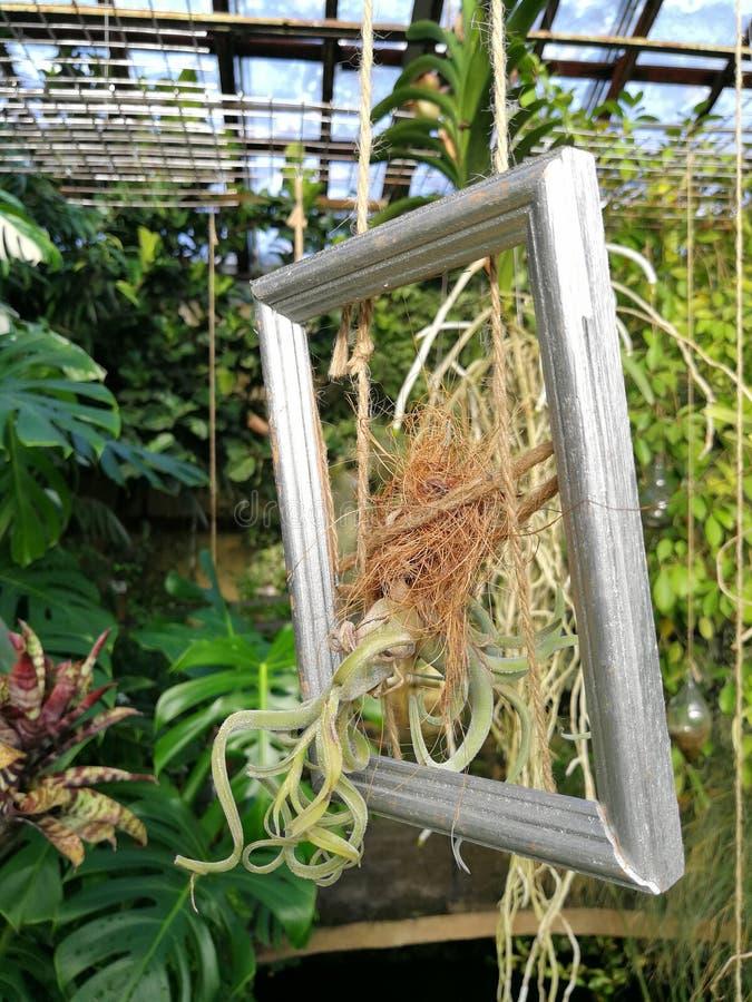 Rama z roślinami obraz royalty free