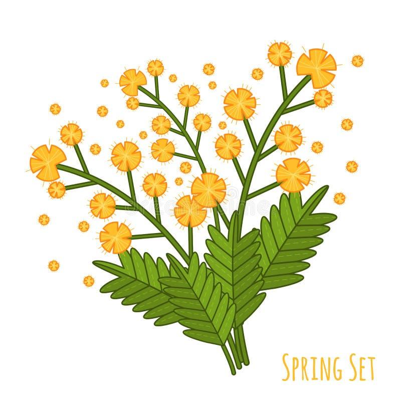 Ramalhete amarelo da mimosa, grande projeto para algumas finalidades Ilustração colorida do vetor dos desenhos animados Flor da m ilustração stock