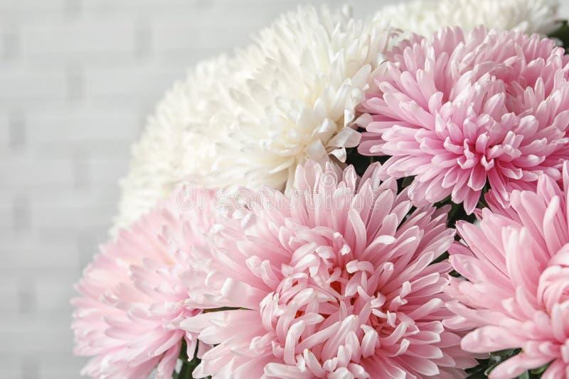 Ramalhete bonito da flor do áster perto da parede de tijolo foto de stock