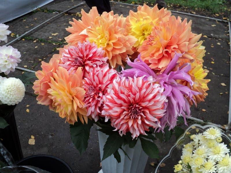 Ramalhete bonito das flores das dálias fotos de stock royalty free