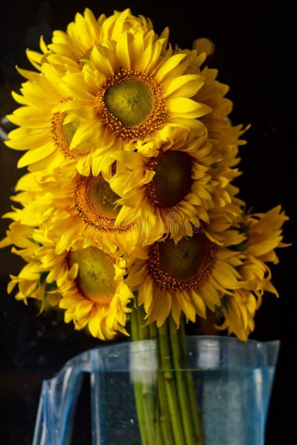 Ramalhete bonito de flores amarelas do p?len morno de um close-up verde do girassol no fundo preto, vista superior, ver?o, outono foto de stock