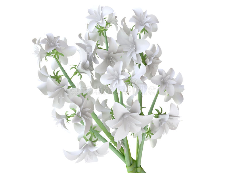 Ramalhete branco bonito do Hyacinth ilustração stock
