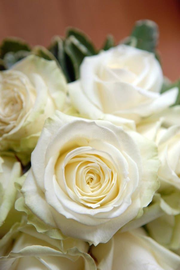 Ramalhete branco de Rosa fotografia de stock