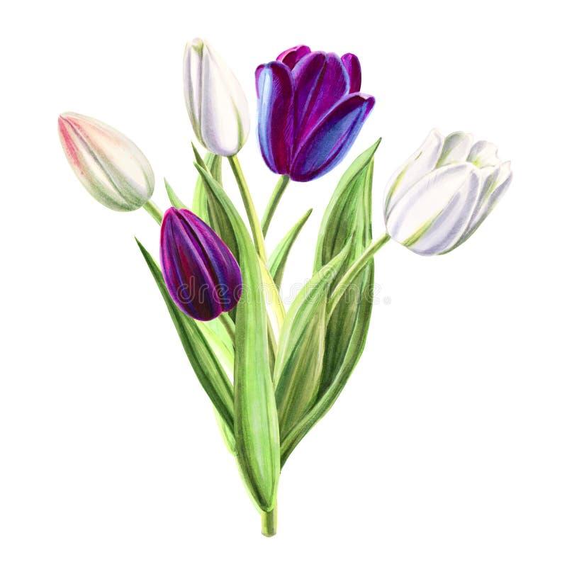 Ramalhete branco e preto bonito da tulipa Desenho do marcador Pintura da aguarela ilustração royalty free