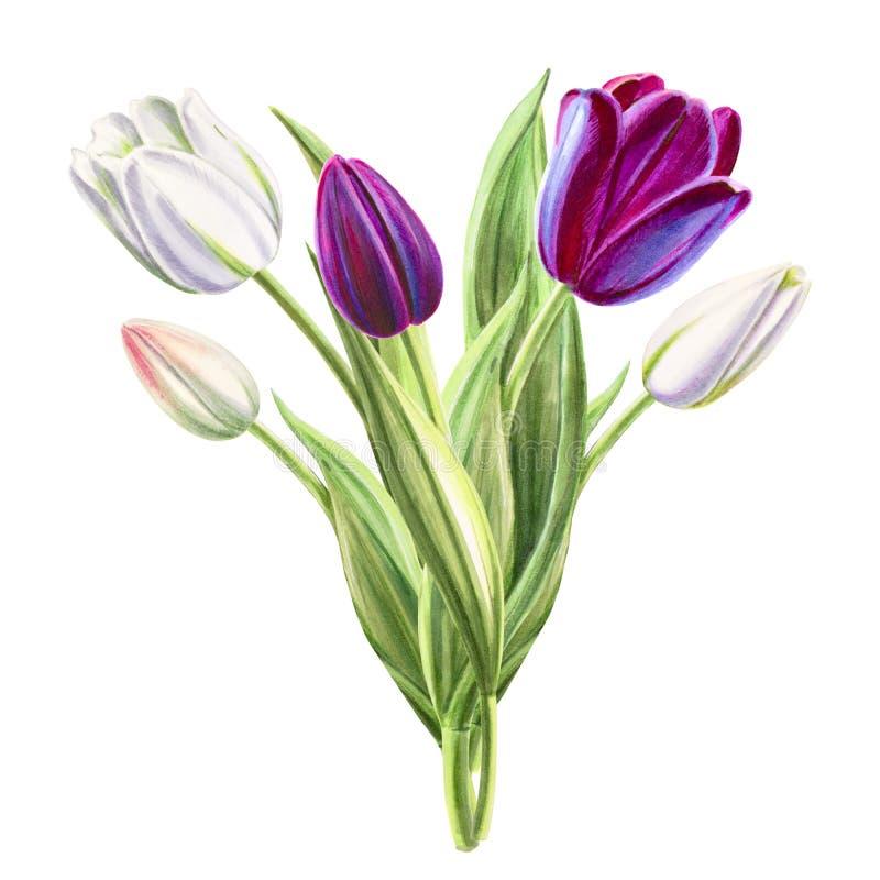 Ramalhete branco e preto bonito da tulipa Desenho do marcador Pintura da aguarela ilustração stock