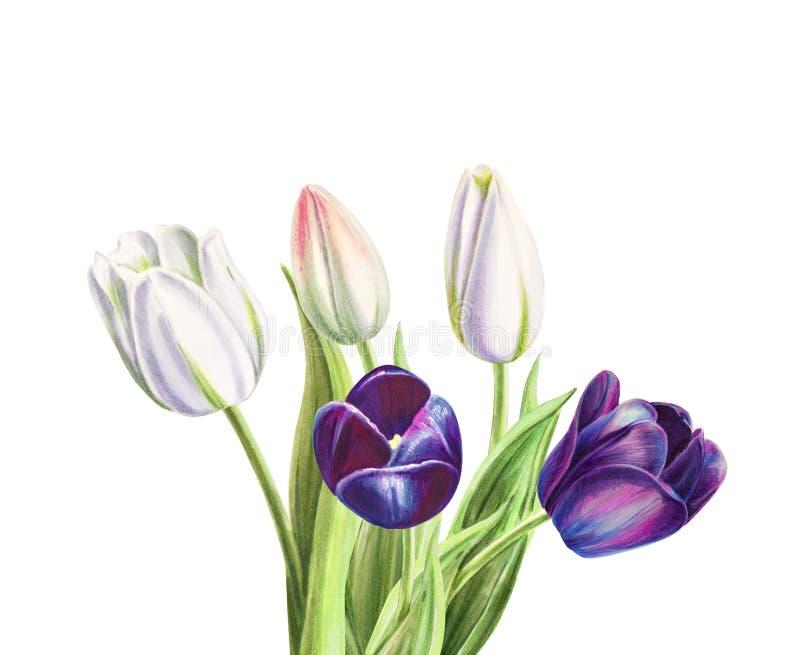Ramalhete branco e preto bonito da tulipa Desenho do marcador Pintura da aguarela ilustração do vetor