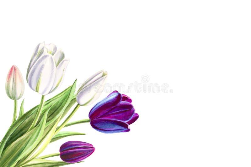 Ramalhete branco e preto bonito do canto da tulipa Desenho do marcador Pintura da aguarela ilustração royalty free
