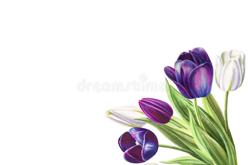 Ramalhete branco e preto bonito do canto da tulipa Desenho do marcador Pintura da aguarela ilustração stock