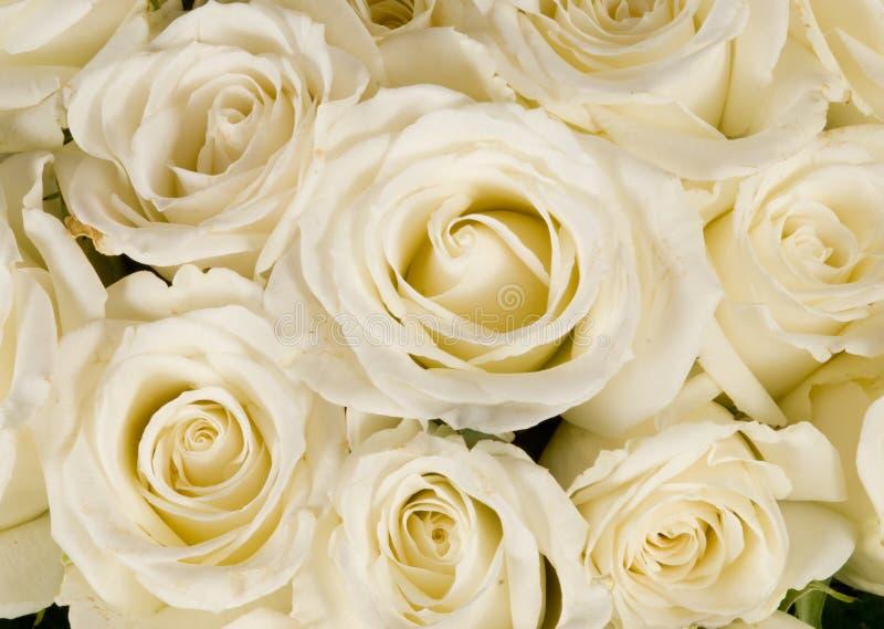 Ramalhete branco Wedding de Rosa fotos de stock