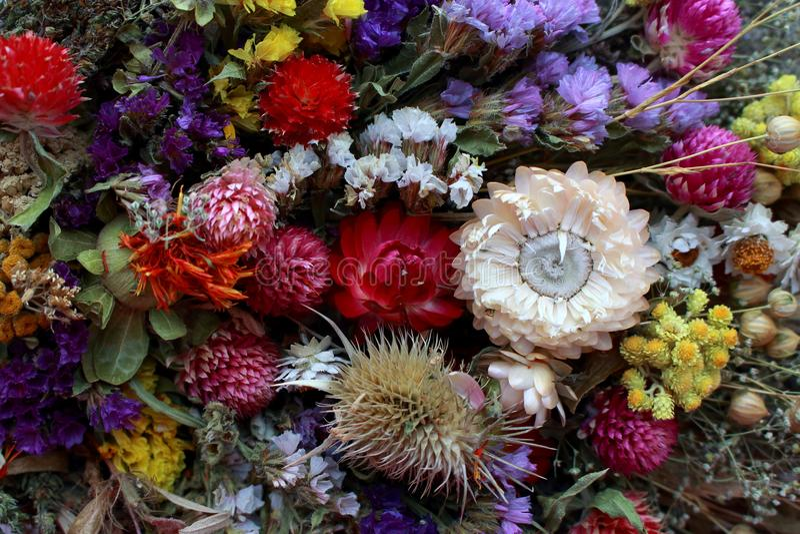 Ramalhete brilhante das flores Presente floral Floresça a decoração Fundo diferente das flores Plantas naturais coloridas foto de stock