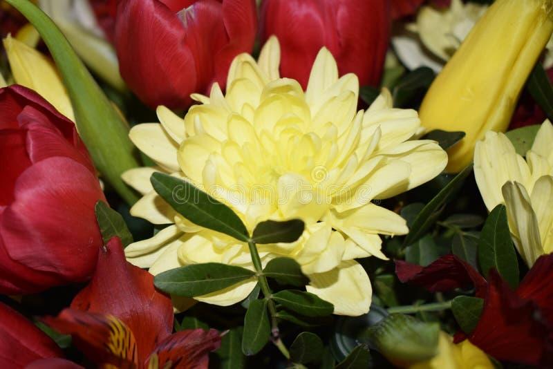 Ramalhete brilhante de flores diferentes imagens de stock