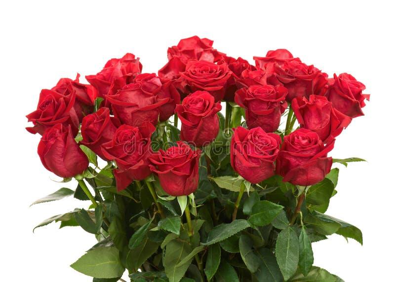 Ramalhete colorido da flor das rosas vermelhas isoladas no backgro branco fotografia de stock