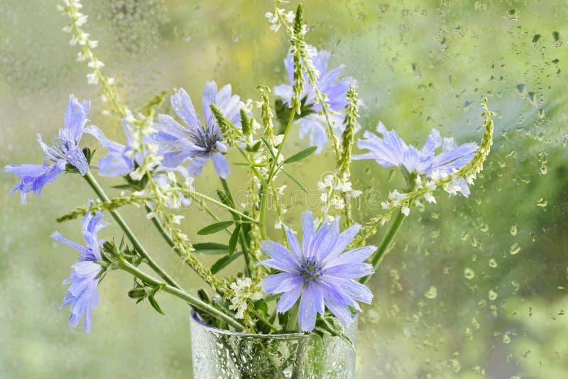 ramalhete com as flores de flores roxas azuis da chicória e dos wi brancos foto de stock royalty free