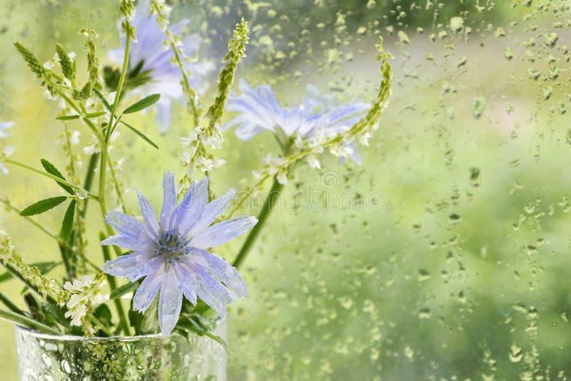 ramalhete com as flores de flores roxas azuis da chicória e dos wi brancos foto de stock