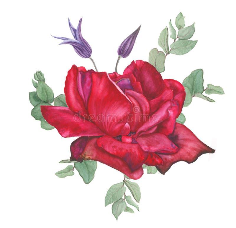 Ramalhete com rosa do vermelho, clematite e eucalipto, pintura da aquarela ilustração royalty free