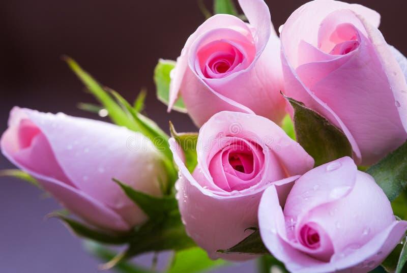 Ramalhete cor-de-rosa bonito das rosas, no fundo uniforme Presente para uma união ou o dia de Valentim imagens de stock