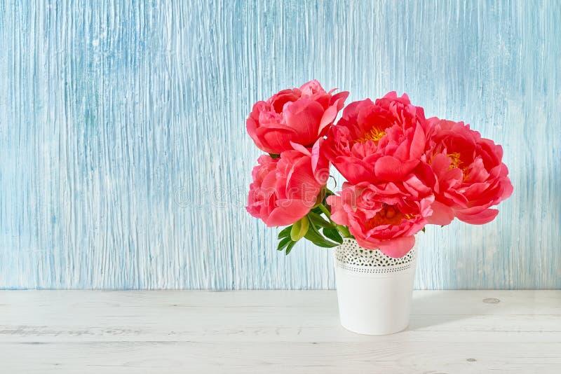 Ramalhete cor-de-rosa da peônia no vaso branco no fundo branco-azul cópia foto de stock