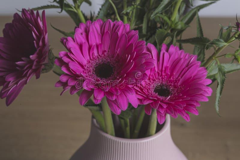 Ramalhete cor-de-rosa das flores do gerber em um potenci?metro da decora??o imagens de stock royalty free