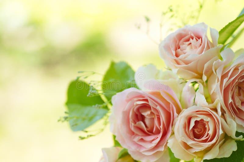 Ramalhete cor-de-rosa das rosas foto de stock