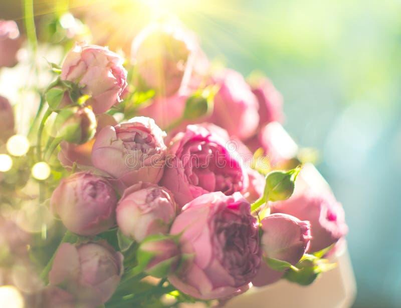 Ramalhete cor-de-rosa das rosas, rosas de florescência Grupo das flores de Rosa na luz solar imagem de stock