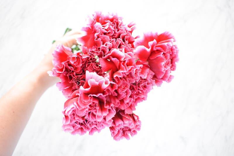 Ramalhete cor-de-rosa dramático dos cravos fotos de stock