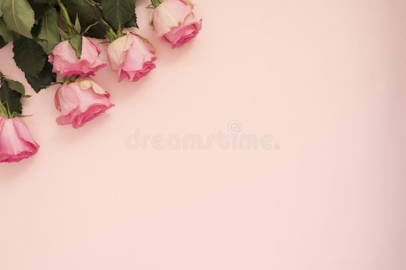 Ramalhete cor-de-rosa impressionante das rosas no fundo cor-de-rosa punchy Copie o espaço, quadro floral Casamento, vale-oferta,  fotos de stock