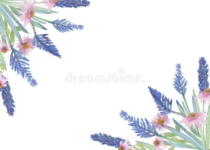 Ramalhete da alfazema e das flores do Echinacea Grupo da aquarela de flores azuis e cor-de-rosa isoladas no fundo branco, projeto ilustração do vetor