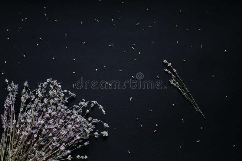 Ramalhete da alfazema em um fundo preto imagens de stock royalty free