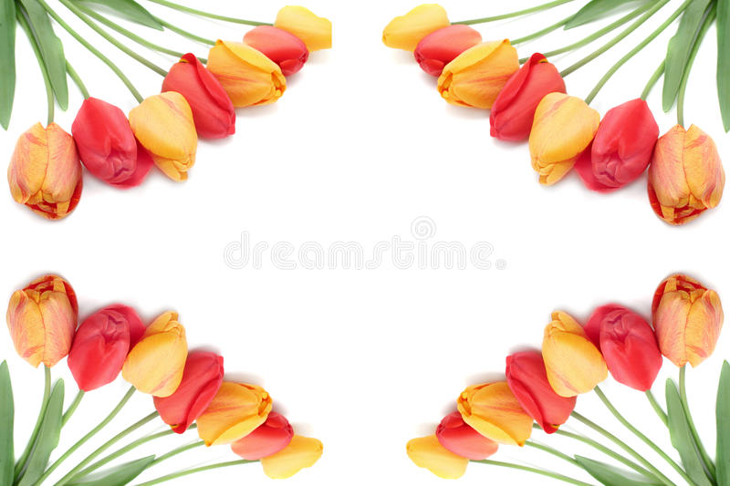 Ramalhete da beira ou do frame dos tulips fotos de stock